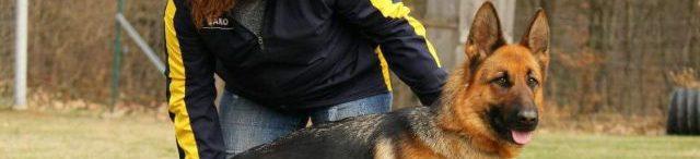 Deutsche Schäferhunde vom Oschatzer Kleinforst